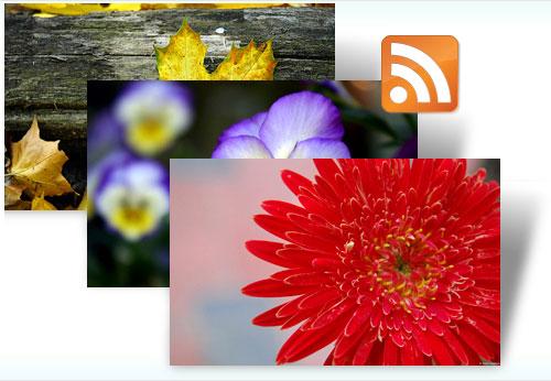 Get free Flora Dynamic theme
