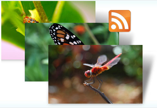 Free Insects dynamic theme
