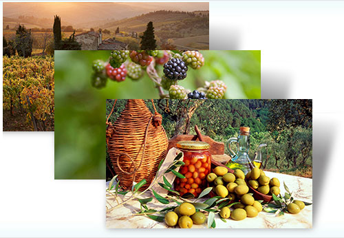 Harvest Time theme, windows themes, free download, tech tips, windows 7 theme