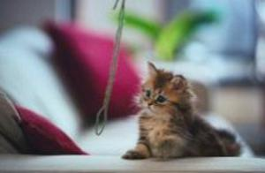 free windows theme, wallpaper, themes, cats