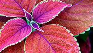 free themes, free wallpapers, Wallpapers, desktop background, windows themes, plant wallpapers, flowers wallpapers