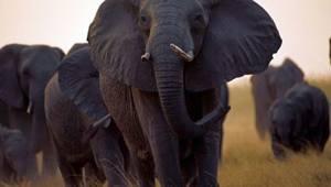 African Wildlife theme