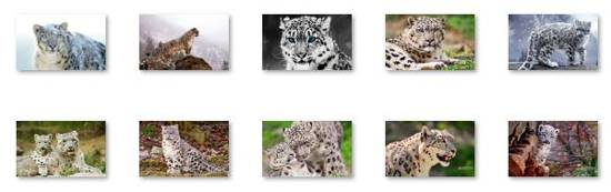 Snow Leopard Windows 8 Theme
