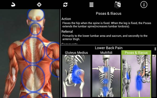get free Android paid app - Muscle Trigger Point Anatomy 2