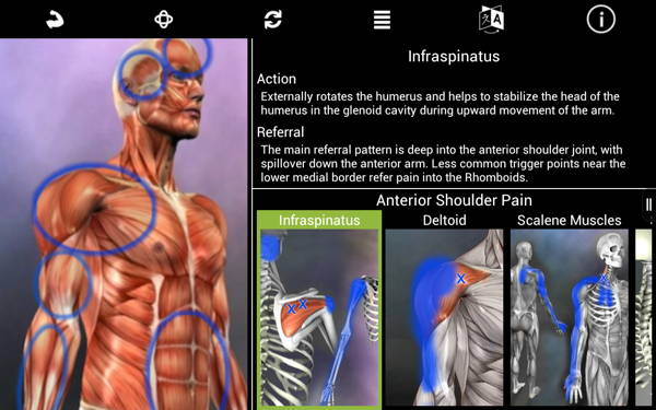 get free Android paid app - Muscle Trigger Point Anatomy 4