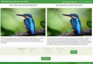 Black Bird Image Optimizer